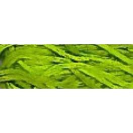 WDW Paris Green