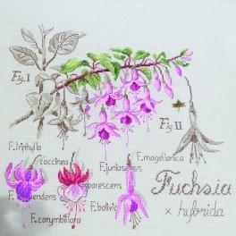 ETUDE AU FUCHSIA